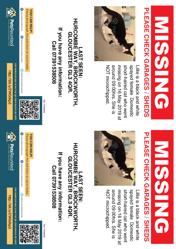 Lost pet flyers - Lost cat: Black and white cat called Lillie