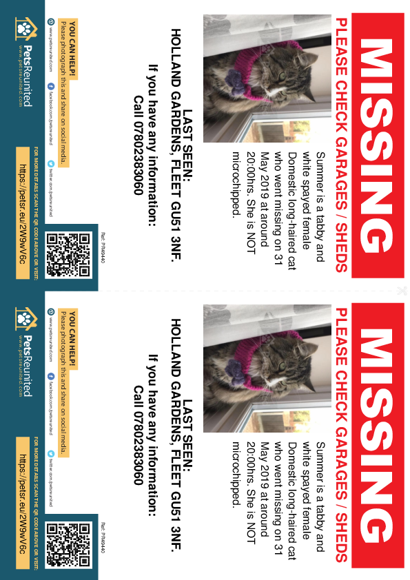 Lost pet flyers - Lost cat: Tabby and white cat called Summer