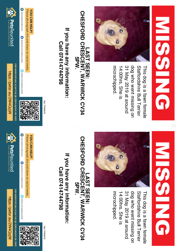Lost pet flyers - Lost dog: Fawn Staffordshire Bull Terrier dog [name witheld]