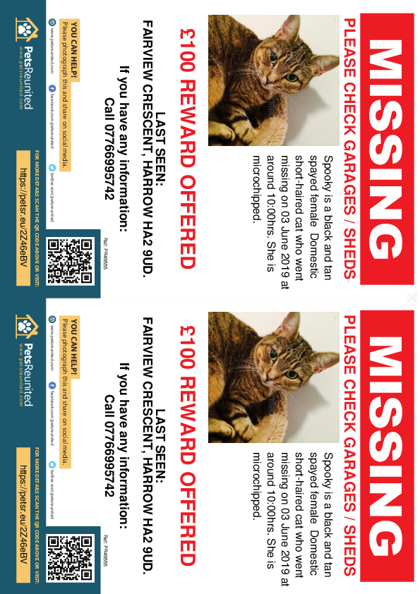 Lost pet flyers - Lost cat: Black and tan cat called Spooky