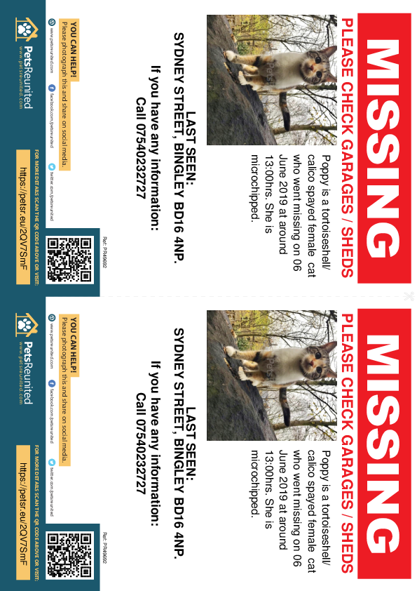 Lost pet flyers - Lost cat: Tortoiseshell/ Calico cat called Poppy