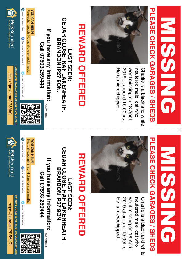 Lost pet flyers - Lost cat: Black and white cat called Charlie