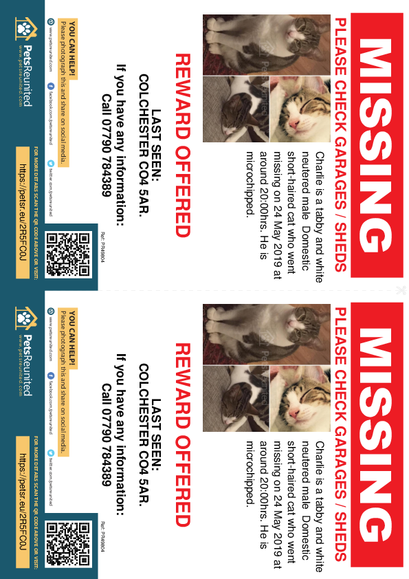 Lost pet flyers - Lost cat: Tortoiseshell and white cat called Charlie