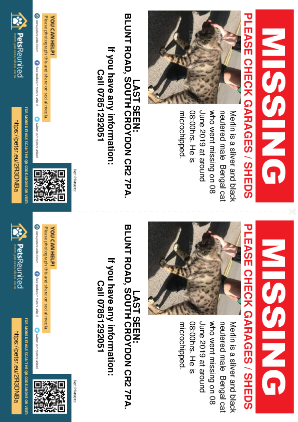 Lost pet flyers - Lost cat: Sliver and Black Bengal cat called Merlin