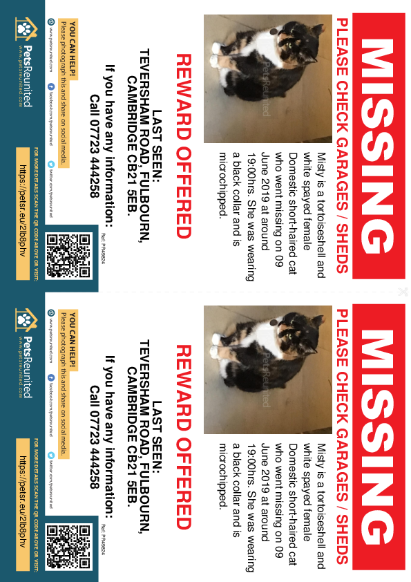 Lost pet flyers - Lost cat: Tortoiseshell and white cat called Misty