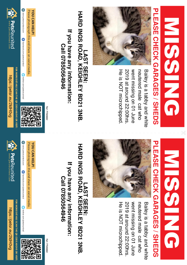 Lost pet flyers - Lost cat: Tabby and white cat called Bailey