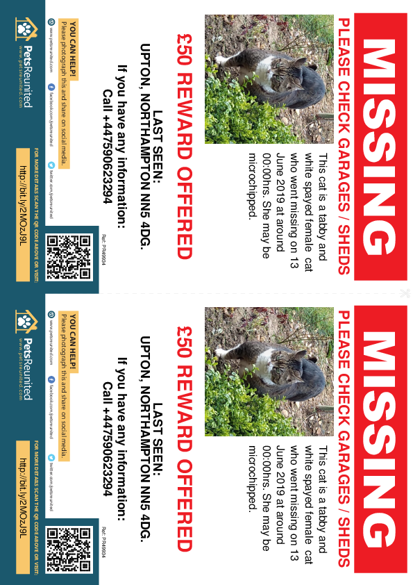 Lost pet flyers - Lost cat: Tabby and white cat [name witheld]