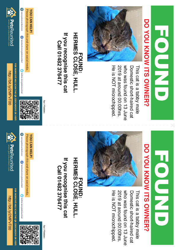 Found pet flyers - Found deceased Tabby cat