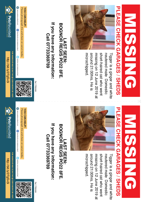Lost pet flyers - Lost cat: Ginger and white cat called Tigger