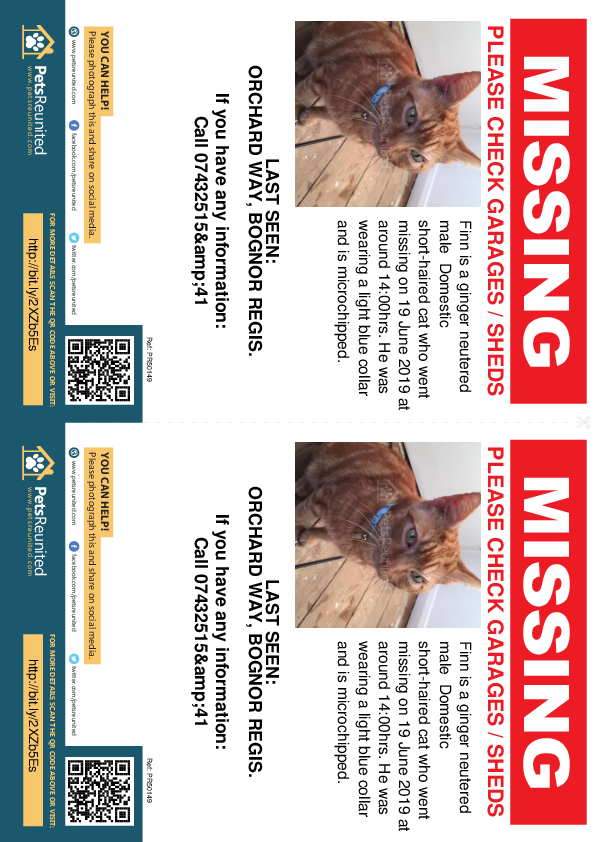 Lost pet flyers - Lost cat: Ginger cat called Finn