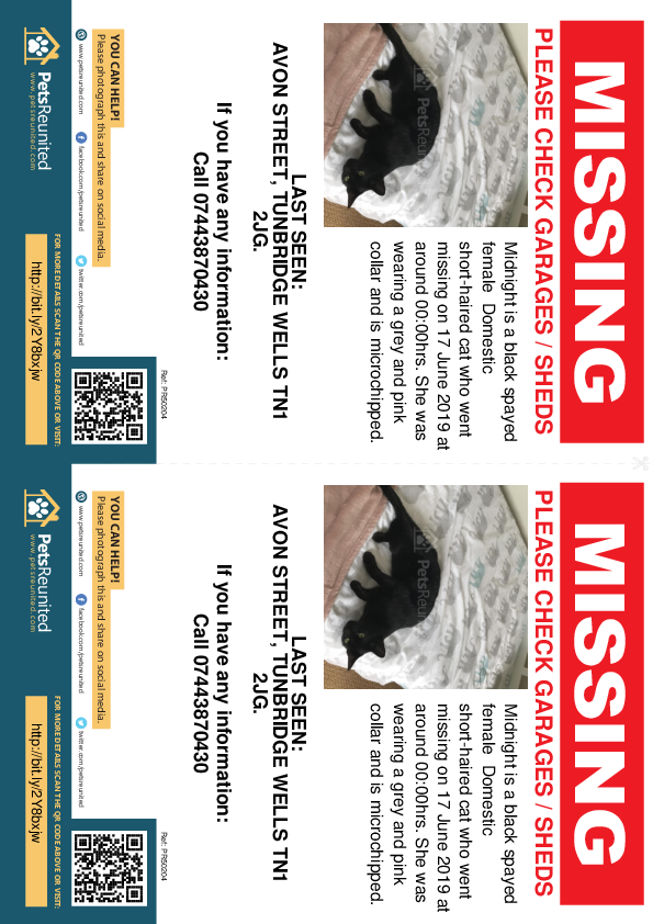 Lost pet flyers - Lost cat: Black cat called Midnight