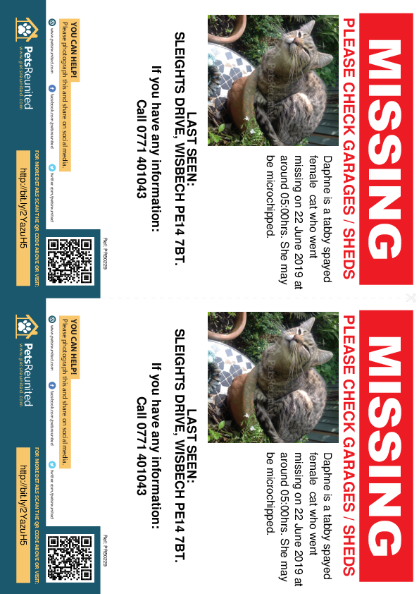 Lost pet flyers - Lost cat: Tabby cat called Daphne
