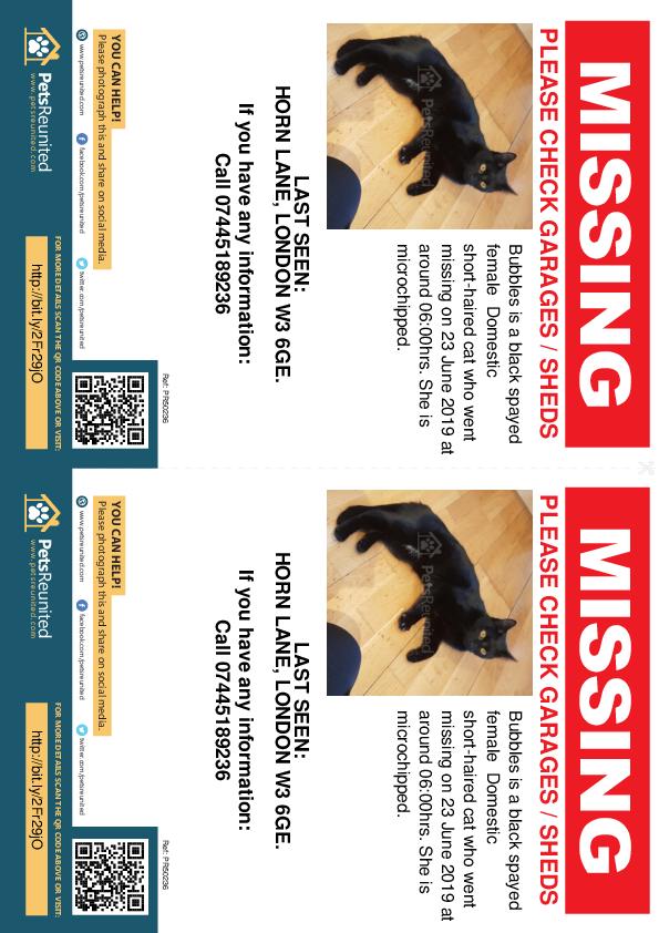 Lost pet flyers - Lost cat: Black cat called Bubbles