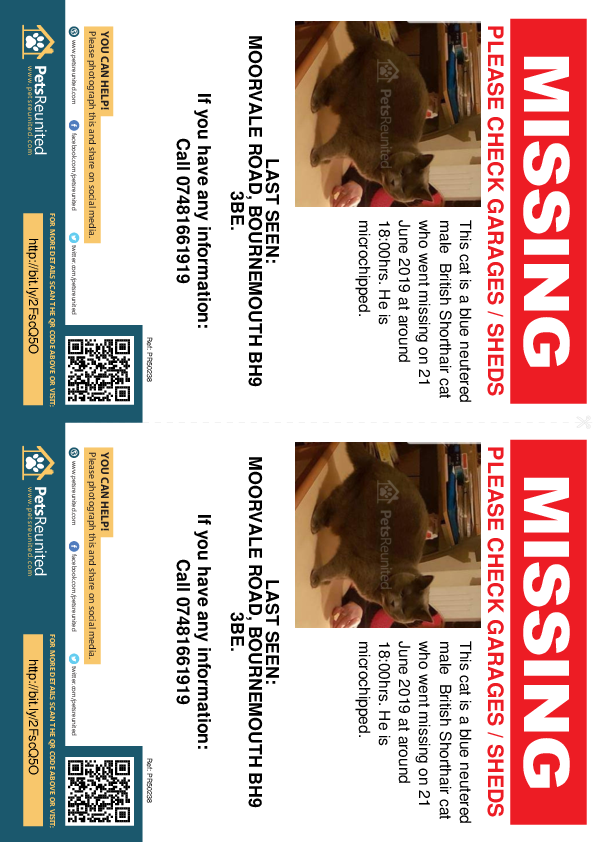 Lost pet flyers - Lost cat: Blue British Shorthair cat [name witheld]