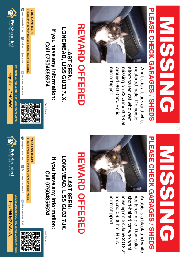 Lost pet flyers - Lost cat: Black and white cat called Anubis