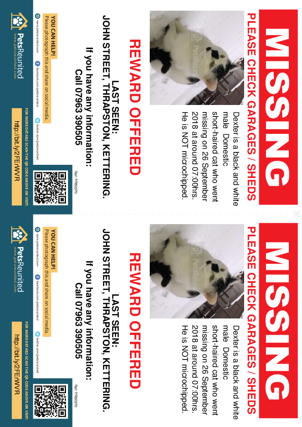 Lost pet flyers - Lost cat: Black and white cat called Dexter