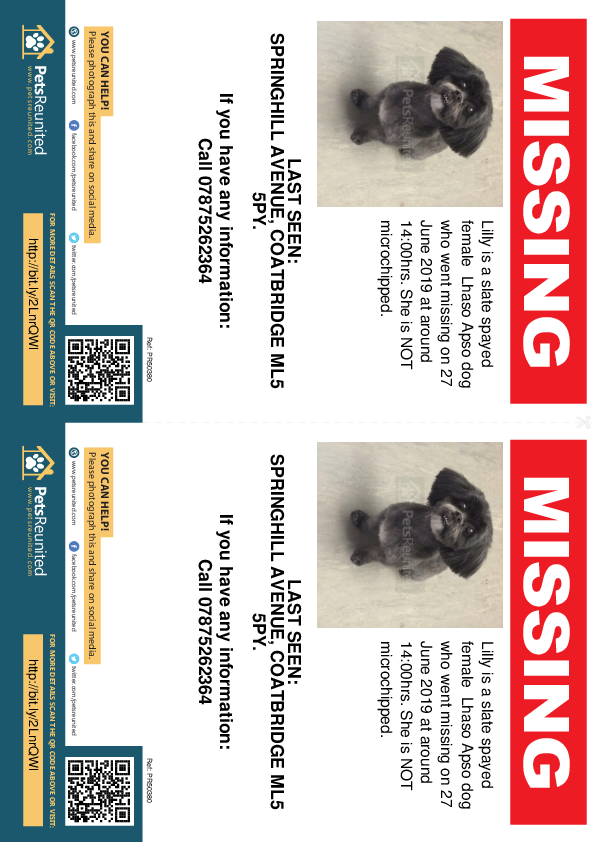 Lost pet flyers - Lost dog: Slate Lhaso Apso dog called Lilly