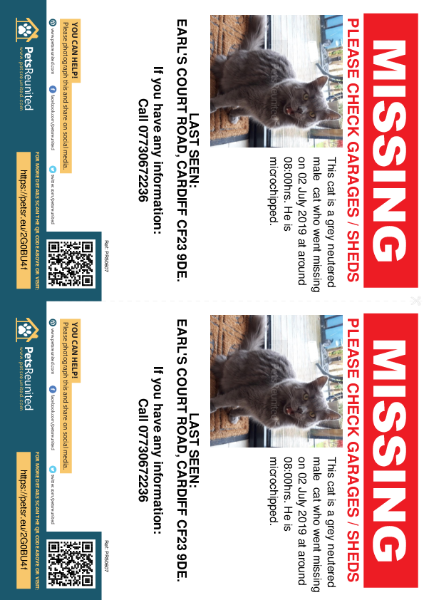 Lost pet flyers - Lost cat: Grey cat [name witheld]