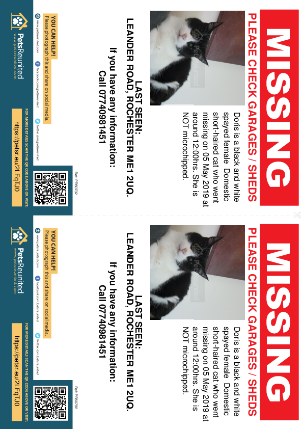 Lost pet flyers - Lost cat: Black and white cat called Doris