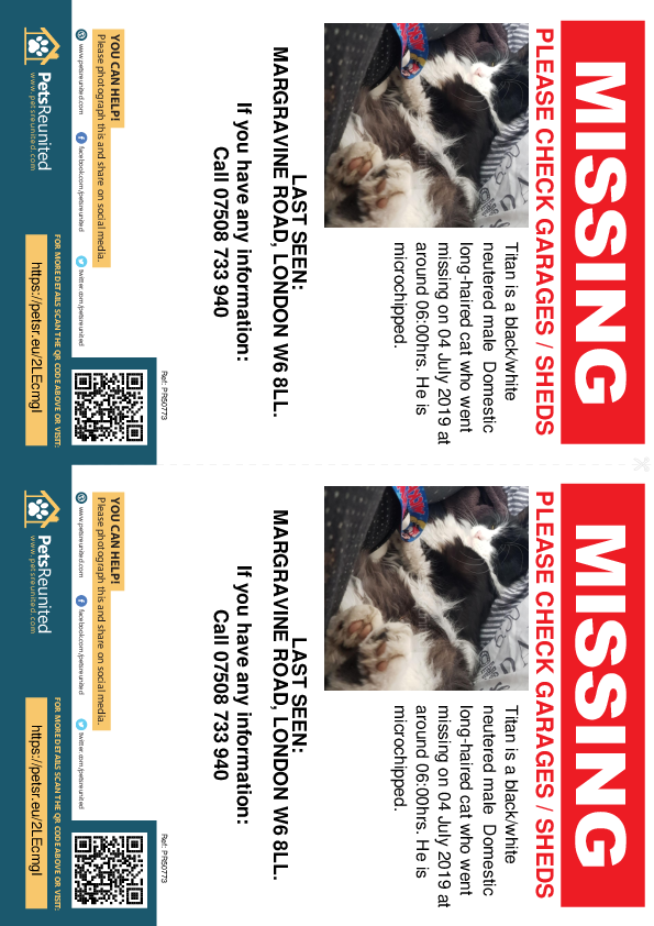 Lost pet flyers - Lost cat: Black/White cat called Titan