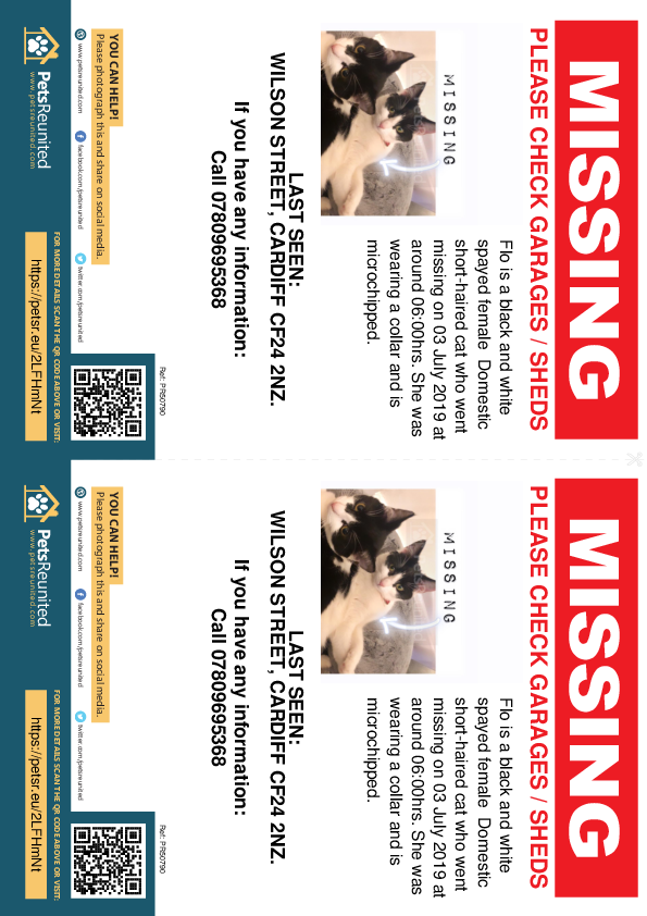 Lost pet flyers - Lost cat: Black and white cat called Flo