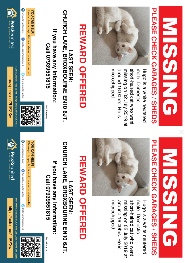 Lost pet flyers - Lost cat: White cat called Hugo