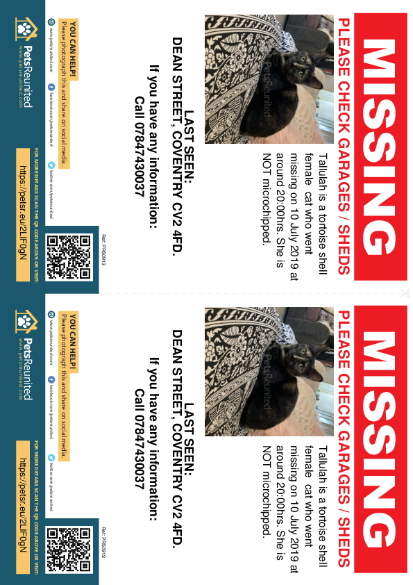 Lost pet flyers - Lost cat: Tortoise shell cat called Tallulah