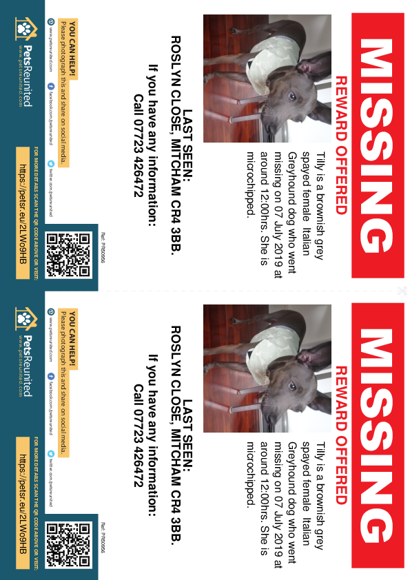 Lost pet flyers - Lost dog: Brownish grey Italian Greyhound dog called Tilly