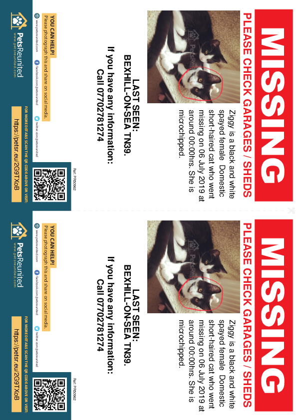 Lost pet flyers - Lost cat: Black and white cat called Ziggy