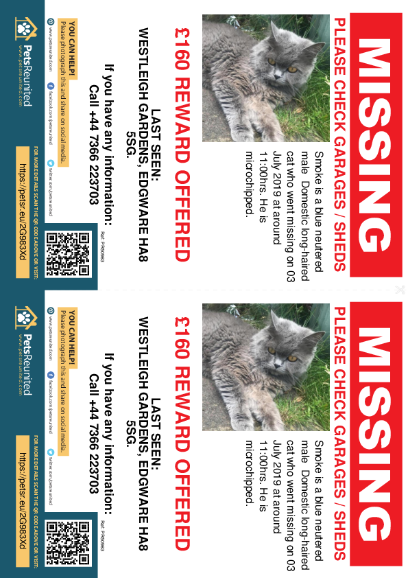 Lost pet flyers - Lost cat: Blue cat called Smoke