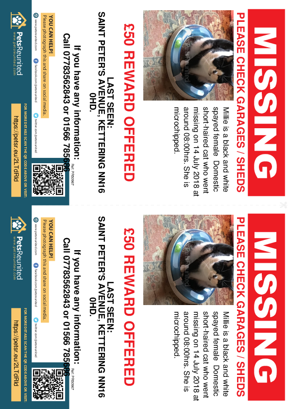 Lost pet flyers - Lost cat: Black and white cat called Millie