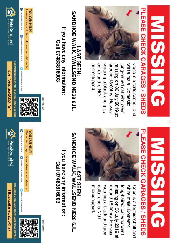 Lost pet flyers - Lost cat: Tortoiseshell and white cat called Coco