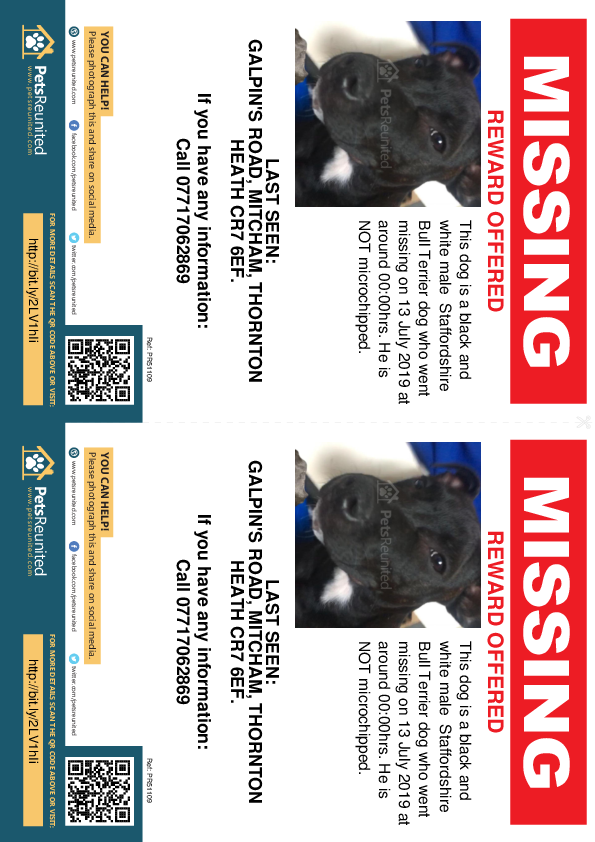 Lost pet flyers - Lost dog: Black and white Staffordshire Bull Terrier dog [name witheld]