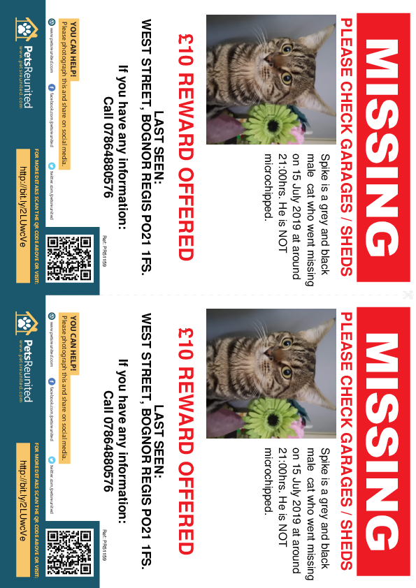 Lost pet flyers - Lost cat: Grey and black cat called Spike
