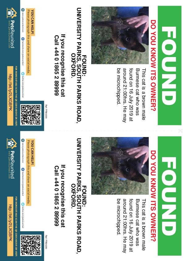 Found pet flyers - Found cat: Brown Burmese cat