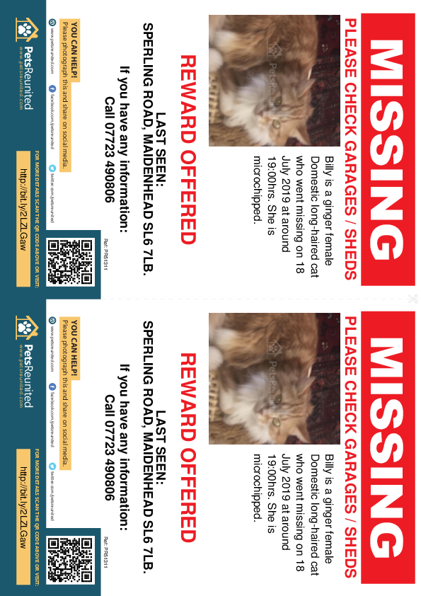 Lost pet flyers - Lost cat: Ginger cat called Billy