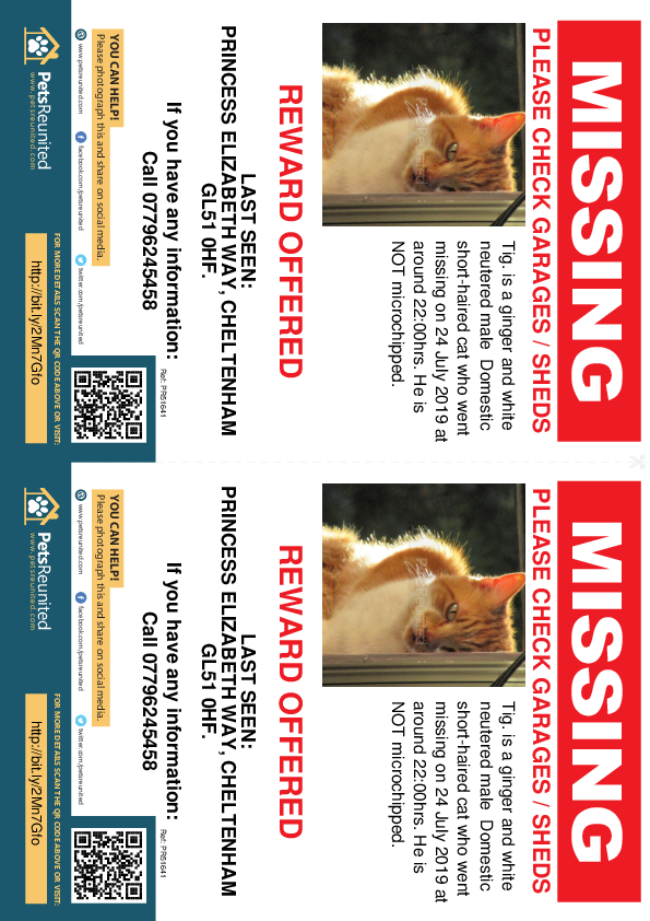 Lost pet flyers - Lost cat: Ginger and white cat called Tig.