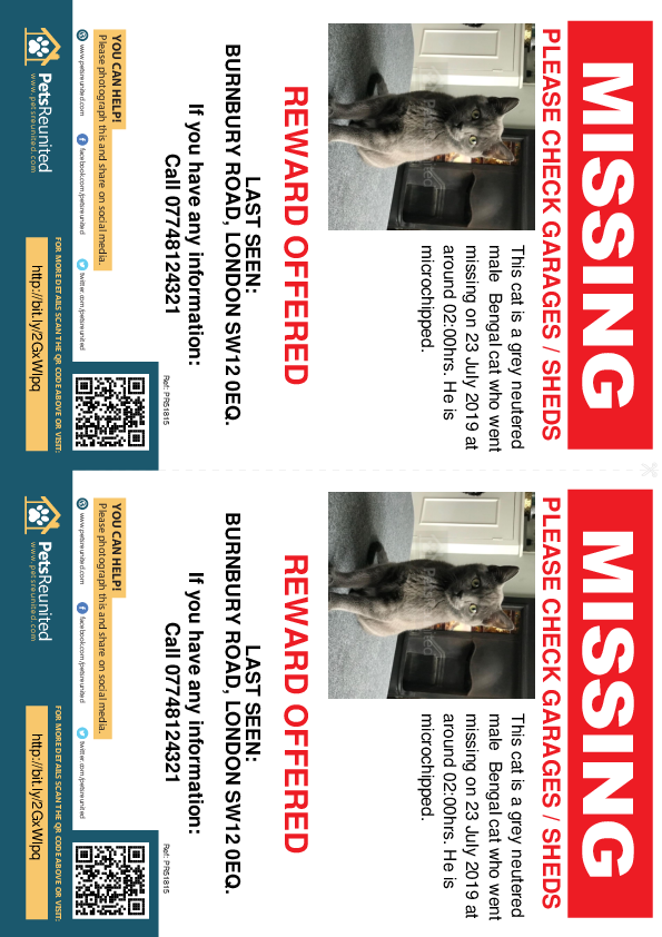 Lost pet flyers - Lost cat: Grey Bengal cat [name witheld]