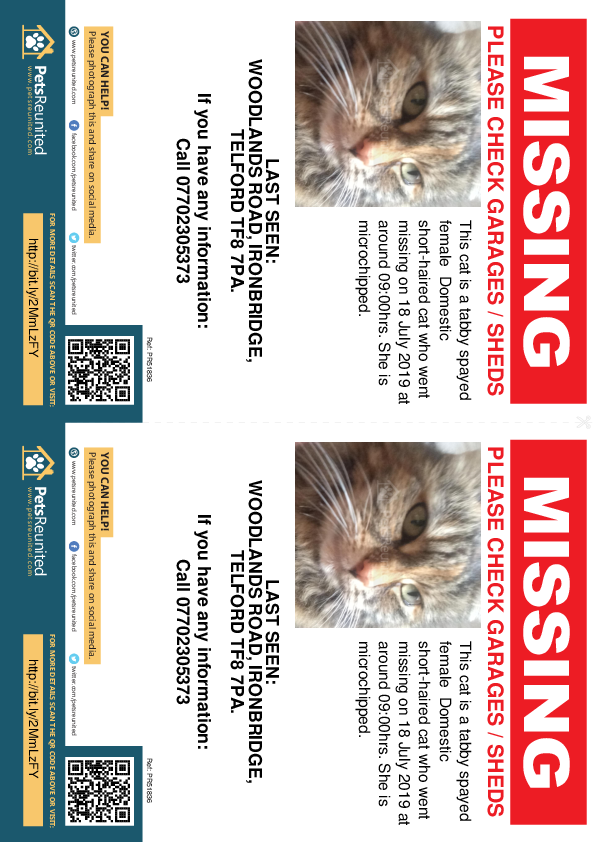 Lost pet flyers - Lost cat: Tabby cat [name witheld]