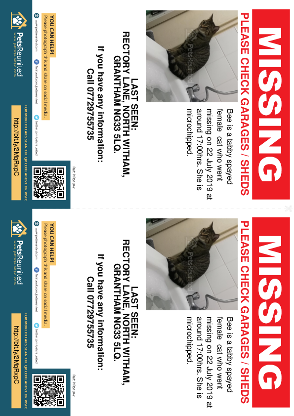 Lost pet flyers - Lost cat: Tabby cat called Bee