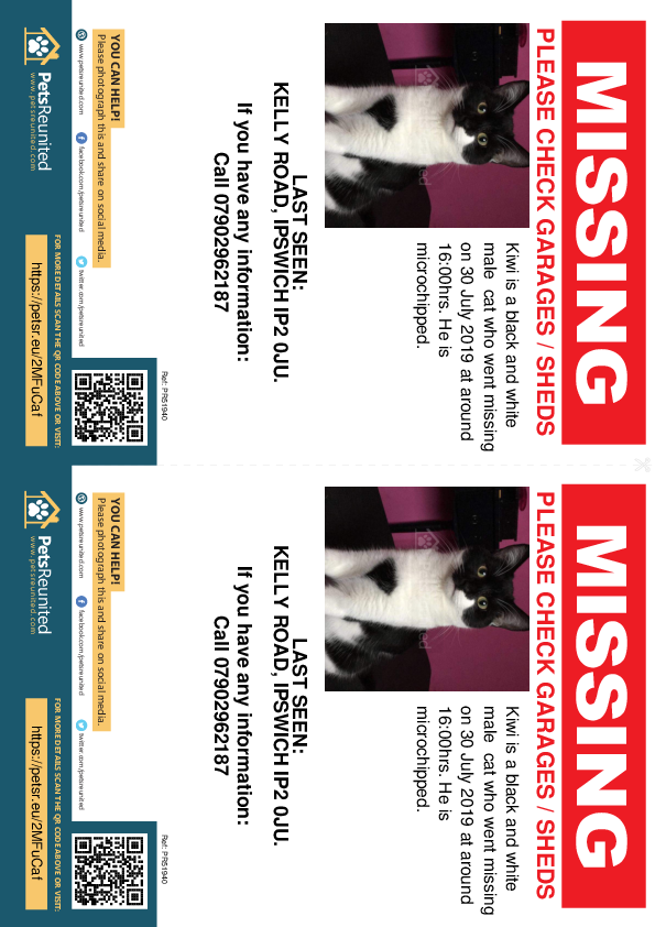 Lost pet flyers - Lost cat: Black and white cat called Kiwi