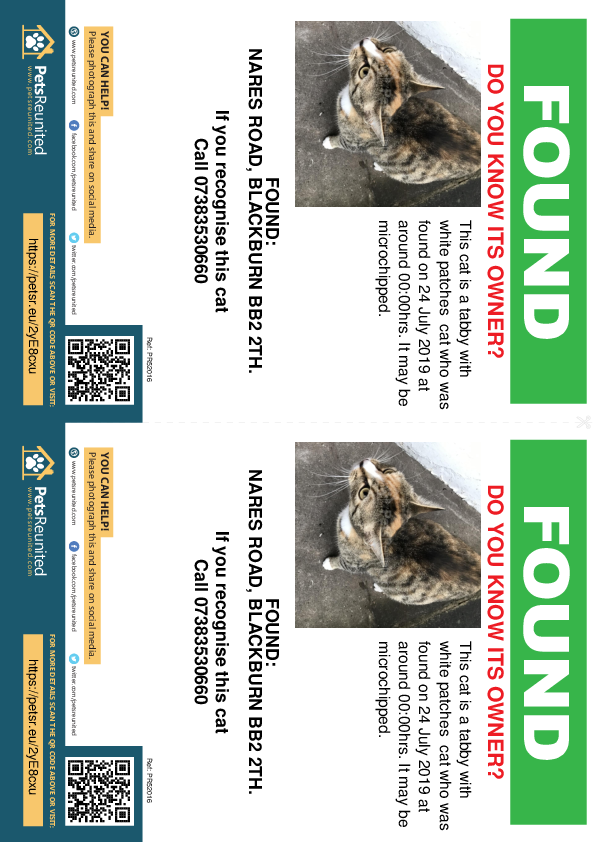 Found pet flyers - Found cat: Tabby with white patches cat