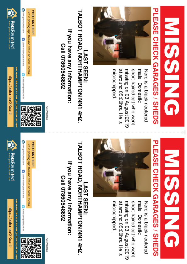 Lost pet flyers - Lost cat: Black cat called Nero
