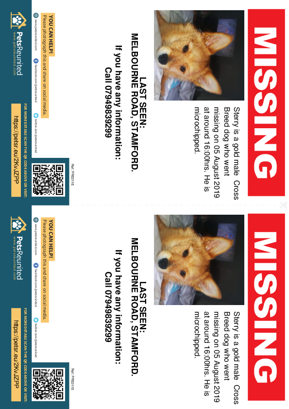 Lost pet flyers - Lost dog: Gold dog called Sterry