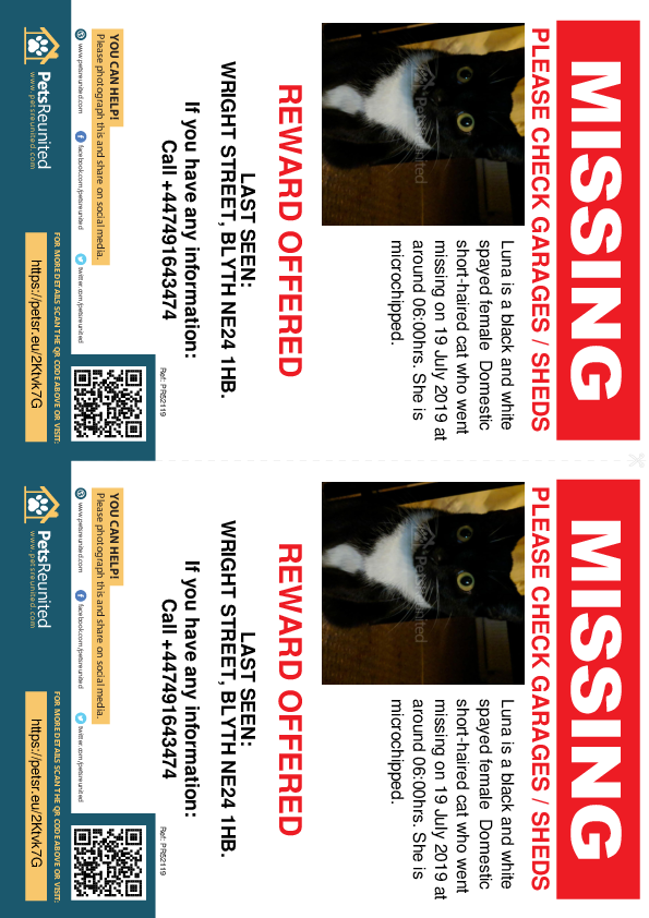 Lost pet flyers - Lost cat: Black and white cat called Luna