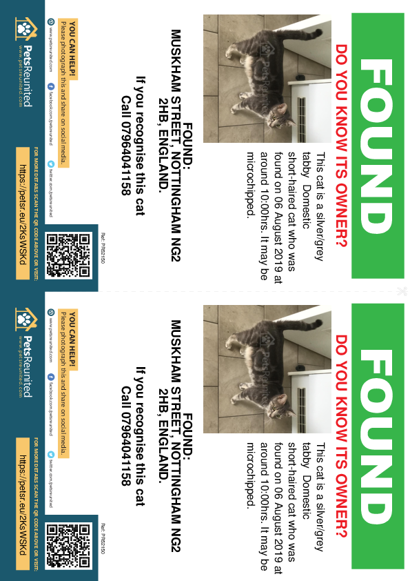 Found pet flyers - Found cat: Silver/Grey Tabby cat