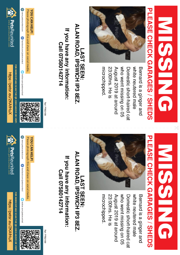 Lost pet flyers - Lost cat: Ginger and white cat called Bernard