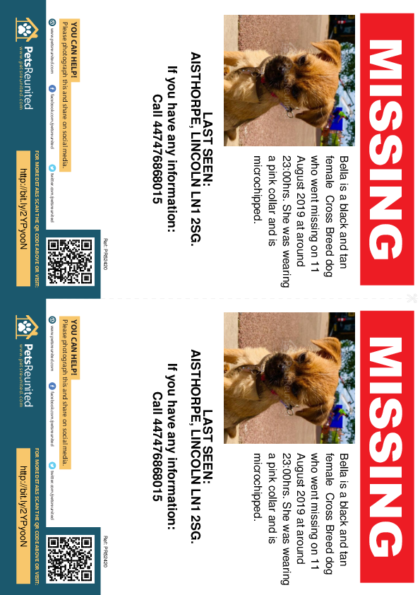 Lost pet flyers - Lost dog: Black and Tan dog called Bella
