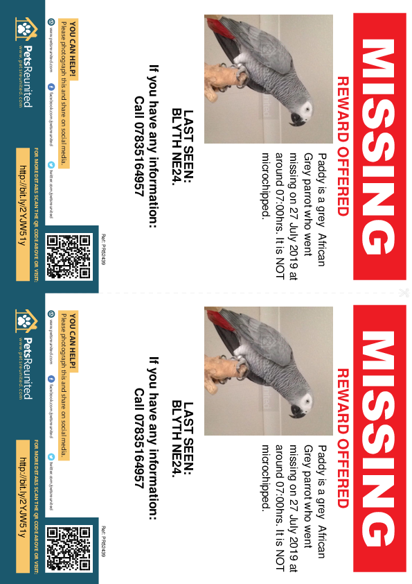Lost pet flyers - Lost parrot: Grey African Grey parrot called Paddy