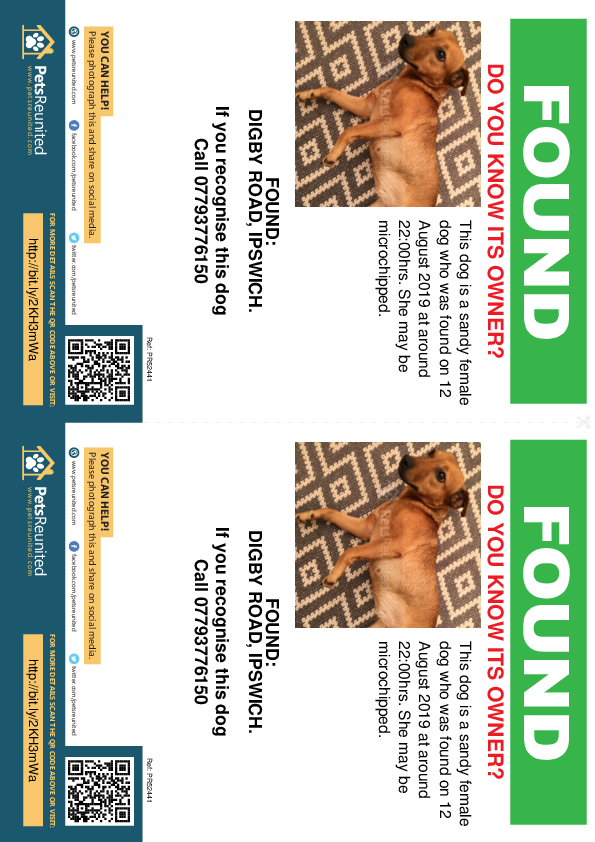 Found pet flyers - Found dog: Sandy dog